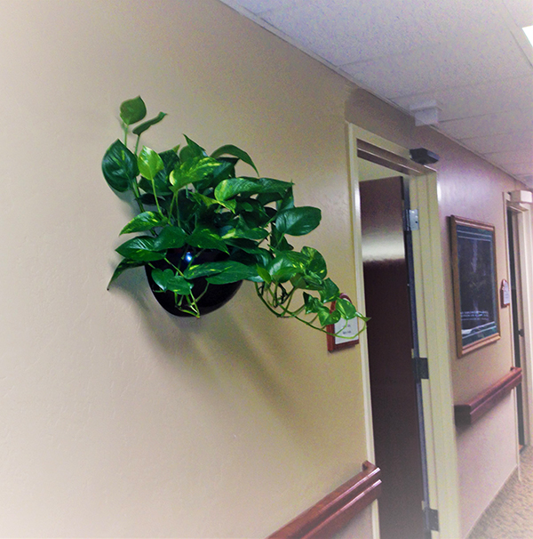 Wall Sconce Plant Jungle