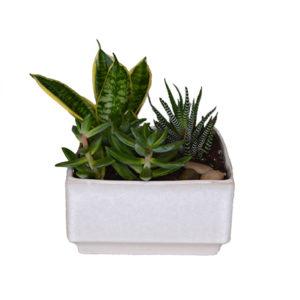 Succulent garden in square planter