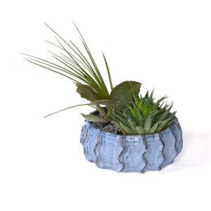 Succulent arrangement in blue ceramic